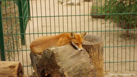 Resting Spot by B-JacobDawson
