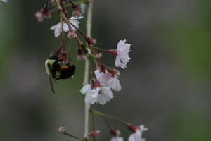 Bee on a Flower by AliDee33