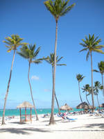 Punta Cana Palm Trees Stock by AliDee33