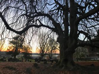 Cemetery Tree 1 Stock by AliDee33