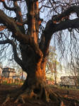 Cemetery Tree 2 Stock by AliDee33