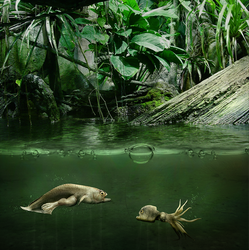 Things in the pond by Eres-Graph