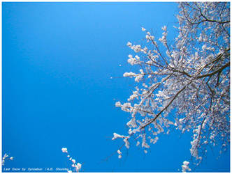 Last Snow by Synnabun