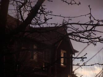 Tree Outside my Window by bunnyjuju