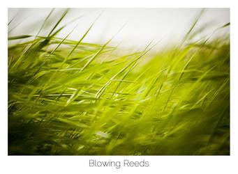 Blowing Reeds by AlexMarshall