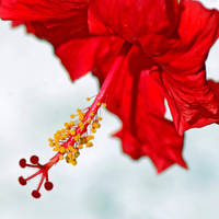 Red .... by sametimenxtyr