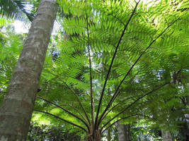Fern Tree by Dace54874