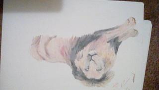 Lion by lunathestarwolf696