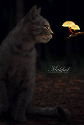 Cat and light mushroom by mahfudzzz