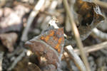 Withered leaf or butterfly? by Tarquinius-Superbus