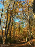 Autumn Colors #2. by Sparkle-Photography
