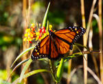Butterfly. by Sparkle-Photography
