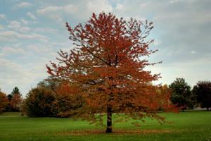 autumn tree by Drezdany-stocks