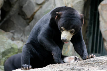 bear 1 by Drezdany-stocks