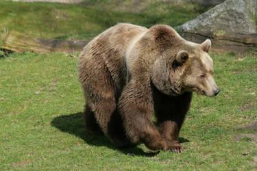 bear 4 by Drezdany-stocks