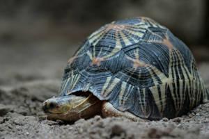 turtle by Drezdany-stocks