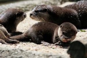 hungry otter child by Drezdany-stocks