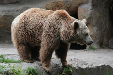 bear 6 by Drezdany-stocks
