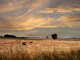 grain field by Drezdany-stocks
