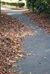 Leaves on a path by ditney