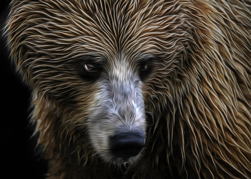 Grizzly by ditney