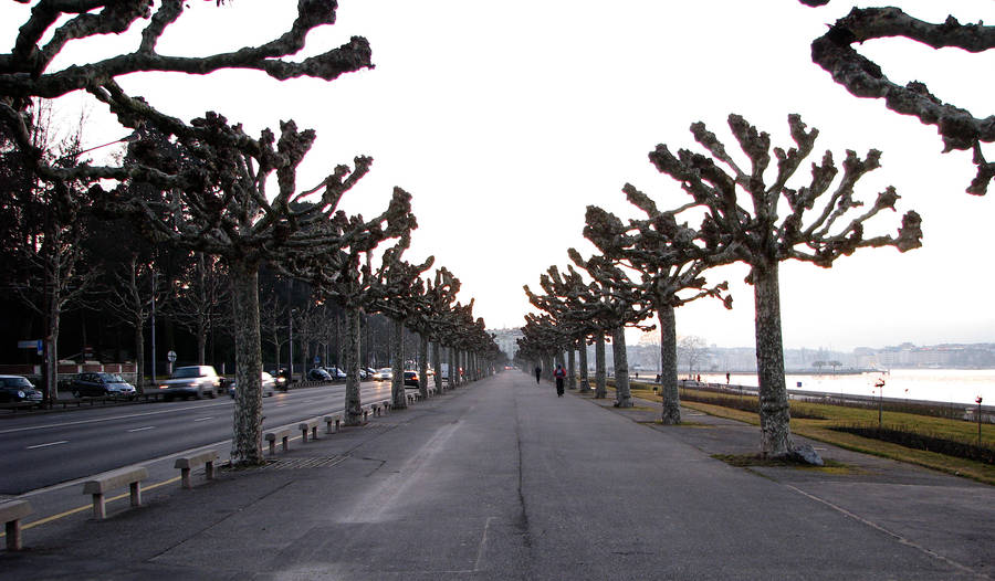 Colonnade of Ents by lapsura