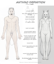 My ANTHRO definitions by VixenDra