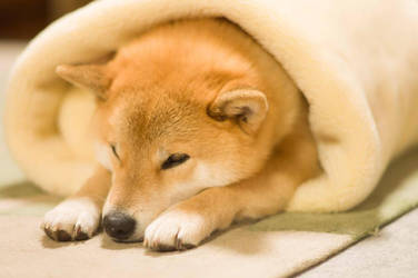 Snug as a rug by marustagram