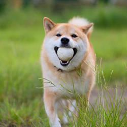 Fetch! by marustagram