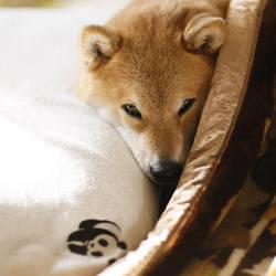 Good night! by marustagram