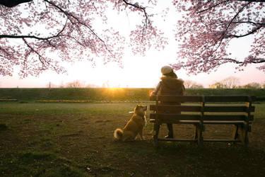 Sunset by marustagram
