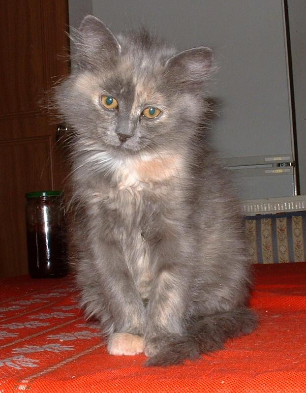 Lynxander's Profile Picture