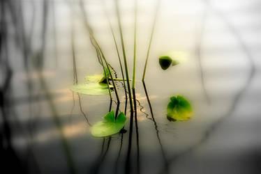 Harmony Zen by Steven0839