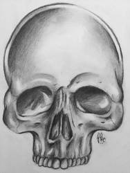 Skull Drawing  by Honeycomb1011