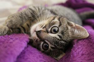 My little cat - Luna by Mimetka