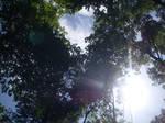 The Heart of the Woods by DarkNekoAngel1010