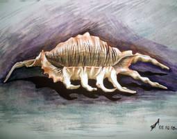 Sea shell by verulka
