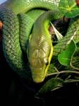 Snake II by Socialtease-stock