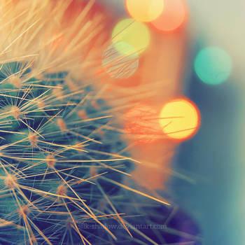 Cactus by Silk-shadow