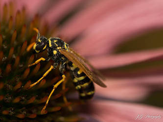 morning dew wasp 3 by lueap