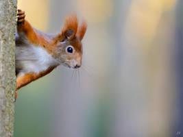 Squirrel by lueap