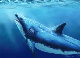 Great White by Atolm
