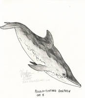 October 8 -Rough-Toothed Dolphin by Atolm
