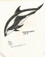 October 31- Hourglass Dolphin by Atolm