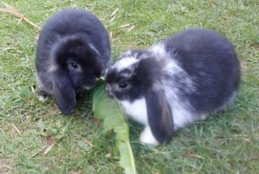 Sharing by Bunnyash890