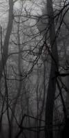 dark forest custom box background by scruuffy