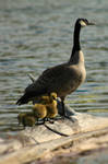 Ducklings by AbstractDr3ams
