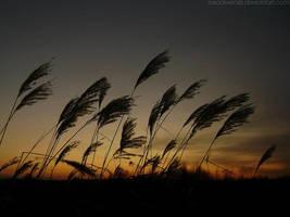 In the wind by rosaarvensis