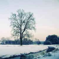Oak I by rosaarvensis