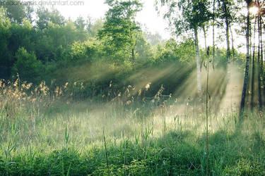 Mist by rosaarvensis